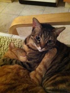 לאקי החתולה חושבת: האם פגעתי בלוק?!