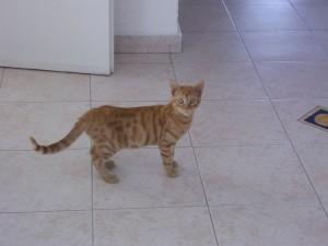 לוק החתול שלנו כשהיה קטן